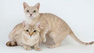 Mèo có thể thùa hưởng thói quen của chủ nuôi.