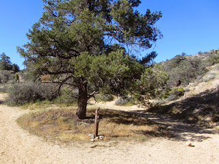 Panorama Loop Trail junction, upper, Black Rock Canyon, Joshua Tree National Park