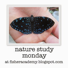 http://fisheracademy.blogspot.com/2013/12/nature-at-your-fingertips-december-nsm.html