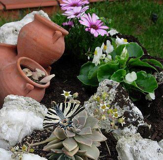 Arte y jardiner a plantas de rocalla for Como hacer mi jardin