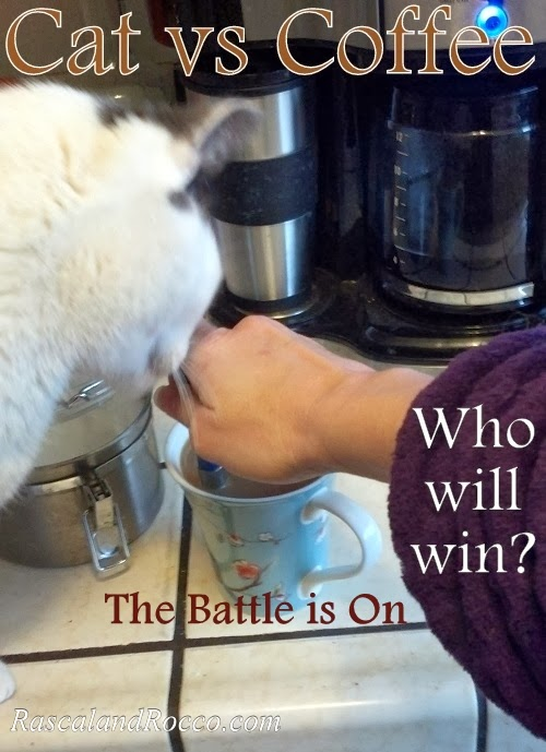 Battle with Cat for Coffee