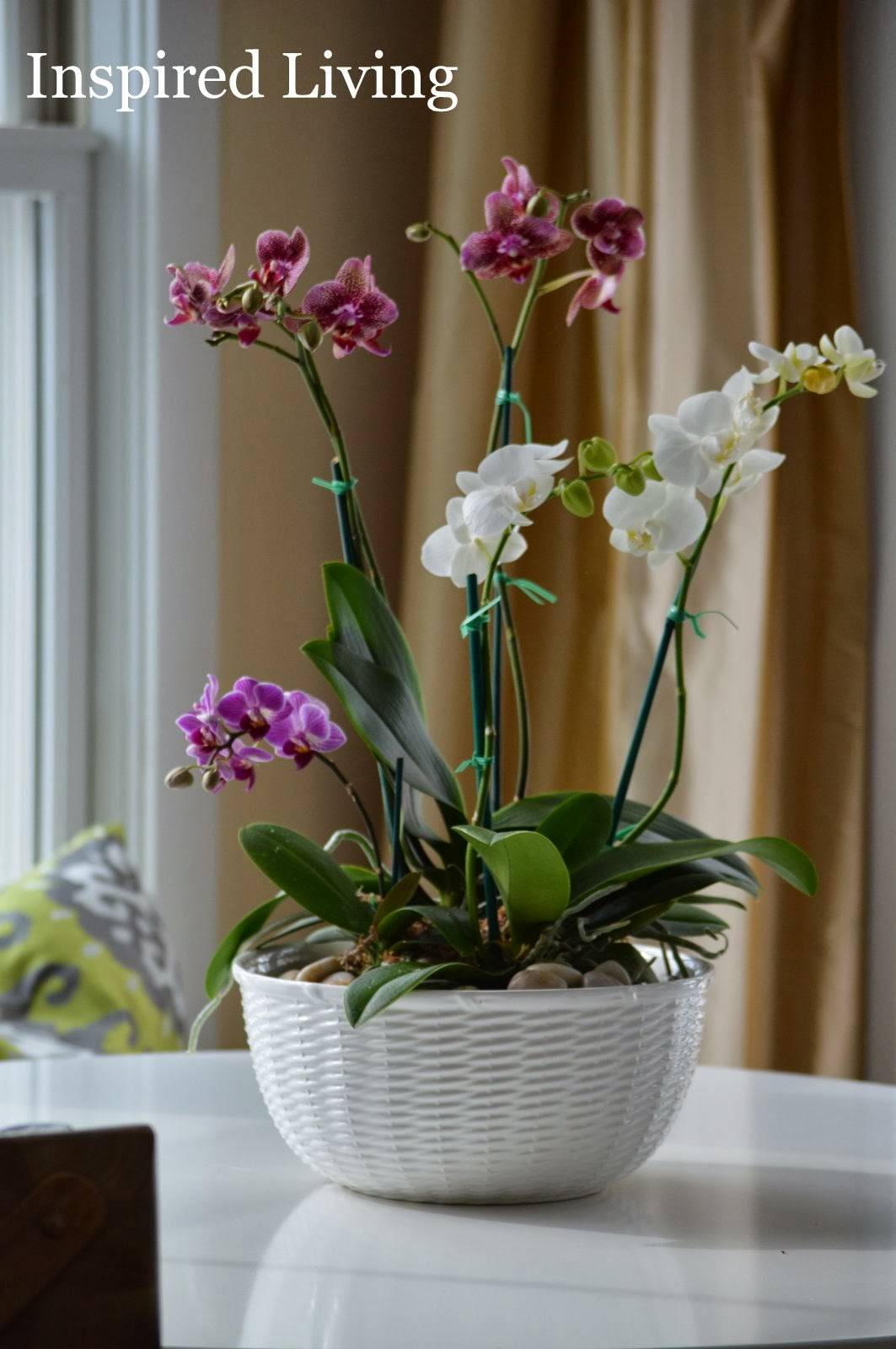 Inspired living easy orchid centerpiece