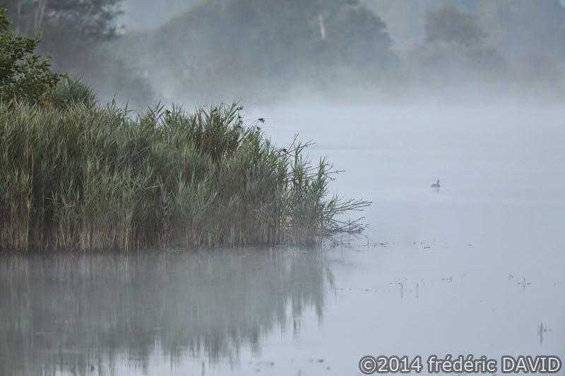 matin brume brouillard étang marais Épisy Seine-et-Marne