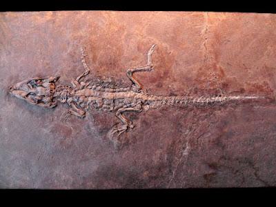 cretaceous reptiles