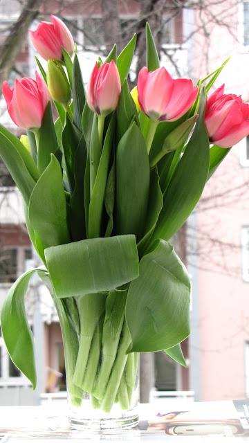 Tulpen, flowers