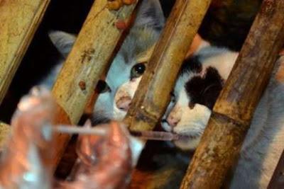 makanan dari daging kucing