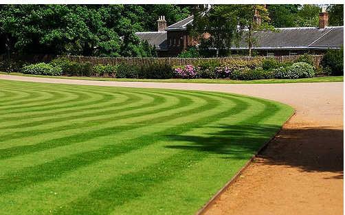 design garden grass inspiration ideas