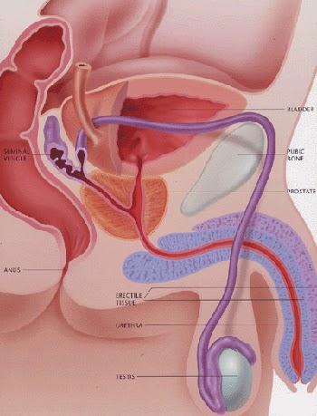 low sperm count treatments