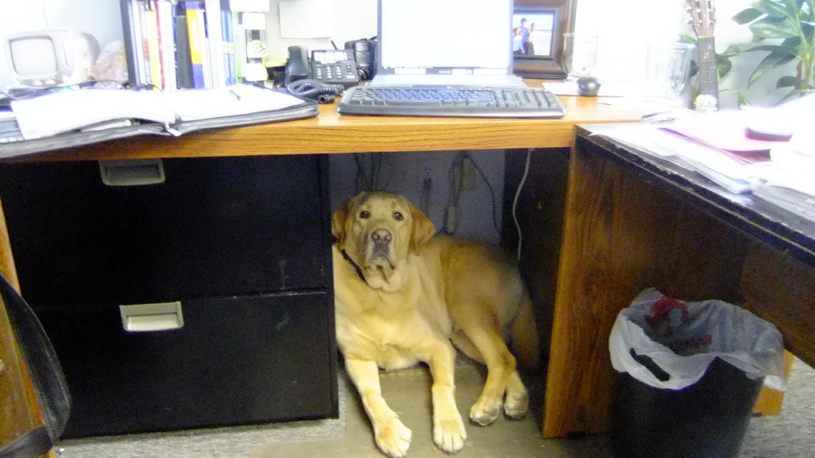 Fs Supply Co Mel The Office Assistant Dog Now