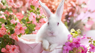 Download Rabbit HD Wallpapers