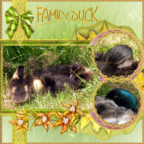 Family Duck.