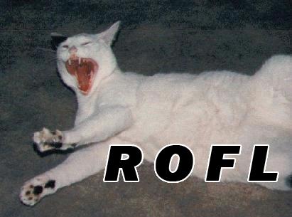 rofl kitten
