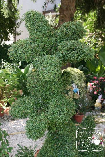 Il giardino di mamma cappuccino e cornetto - Nomi di piante da giardino ...