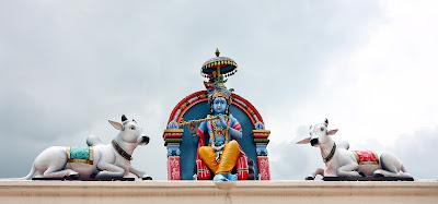 Kriszna, świątynia, święta krowa, kasta niedotykalnych, niebieski, indygo, błękitny, farbiarze