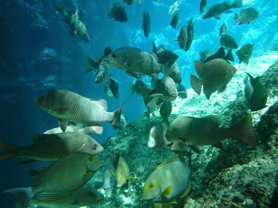 Enchanted River Fishes