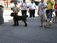 Dog 2BDays 2B2011 2B004
