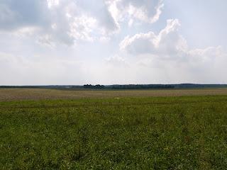 Buchendorf von Norden