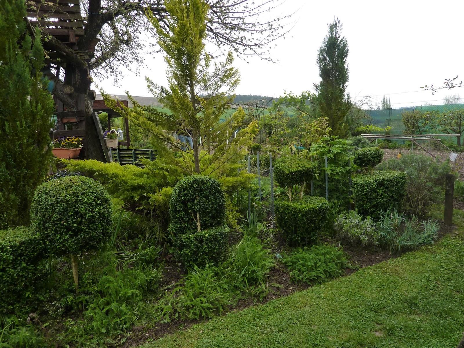 Le jardin de marianne taille des buis - Taille des buis ...