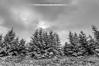 evergreen trees with a fresh, light coating of snow after the first snowfall of the season in central ontario by chris gardiner photography www.cgardiner.ca
