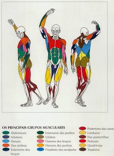 Grupos Musculares - Bem Bela