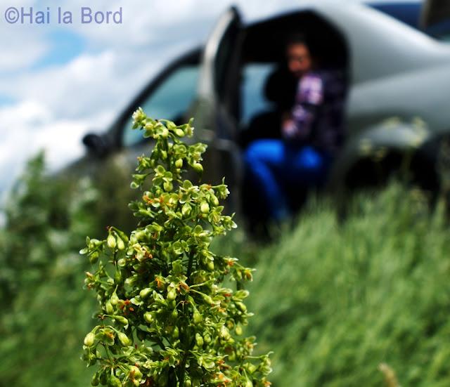 floare verde intre arini si belin