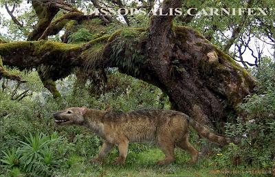 Hyaenodontidae Dissopsalis