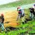 Registran más de 50% haitianos agro