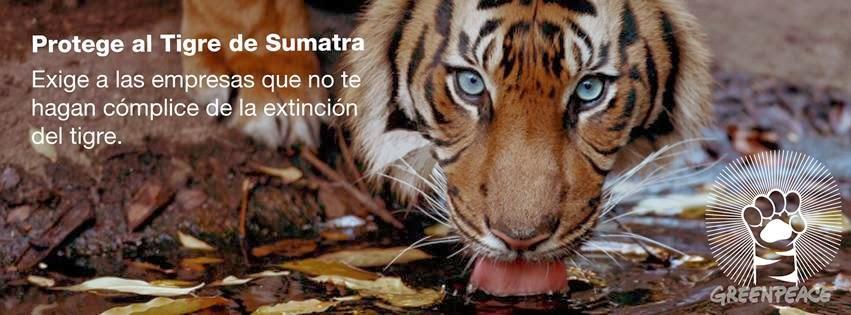 ! PROTEGE AL TIGRE DE SUMATRA ! APOYAMOS CAMPAÑA GREEN PEACE