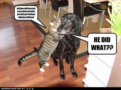 Funny Animals Zone: Funny Cats And Dogs With Captions