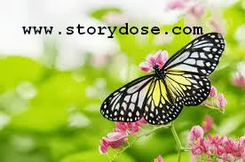 Inspirational Story - A Butterfly Lesson