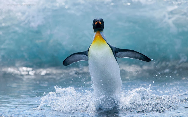 Penguin wallpapers hd