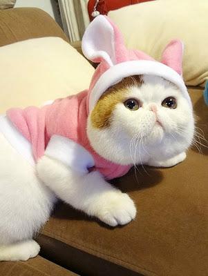 Foto-foto kucing paling imut bernama Snoopy 05