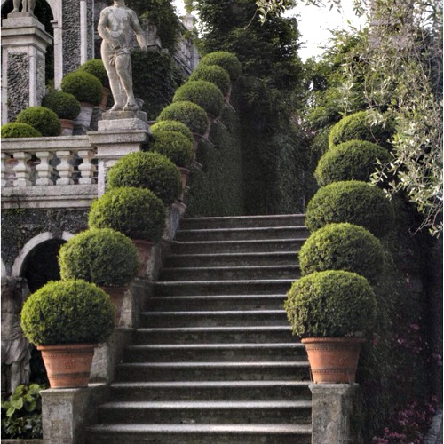 Amazing Topiary: YES To Boxwood In Pots Flanking Stairs