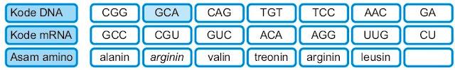 Delesi nukleotida mutasi gen