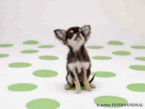 Cute Dogs 19