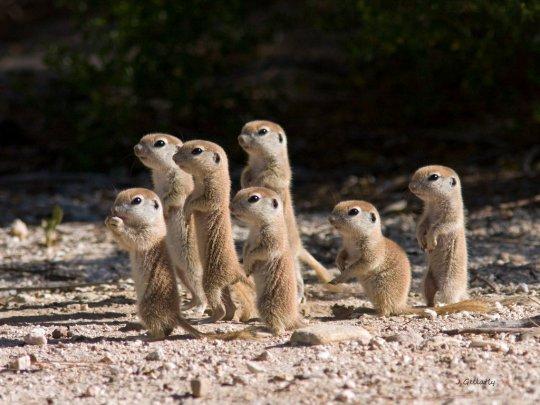 Resultado de imagem para esquilos familia