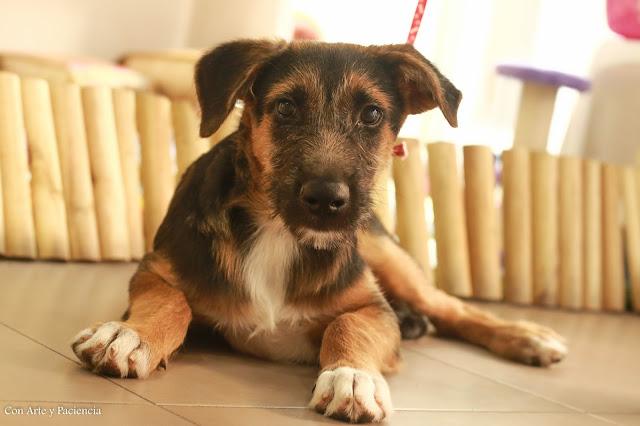 adoptar, perro, salvar una vida, valencia, alzira, maltratado, rio,adoptante, miedo, cariño, amor, ternura,