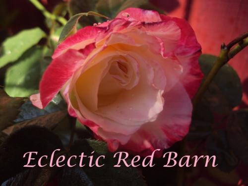 Variegated Pink Rose