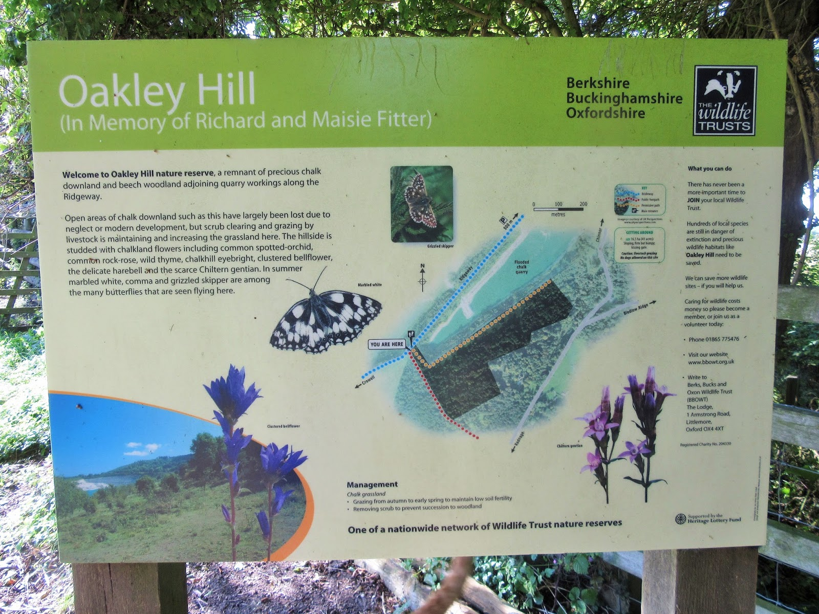 ... including chalk grassland and beech woods, was given to BBOWT to look  after. This is now called the Oakley Hill nature reserve.