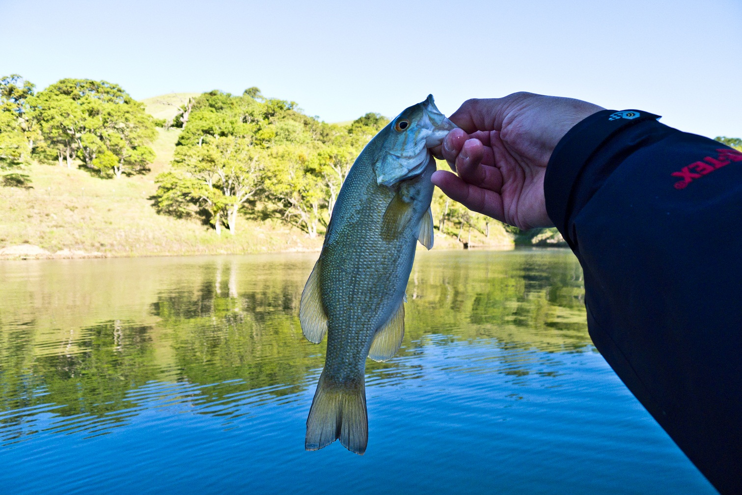 Big red angler bay area freshwater lake del valle 2011 for Lake del valle fishing report