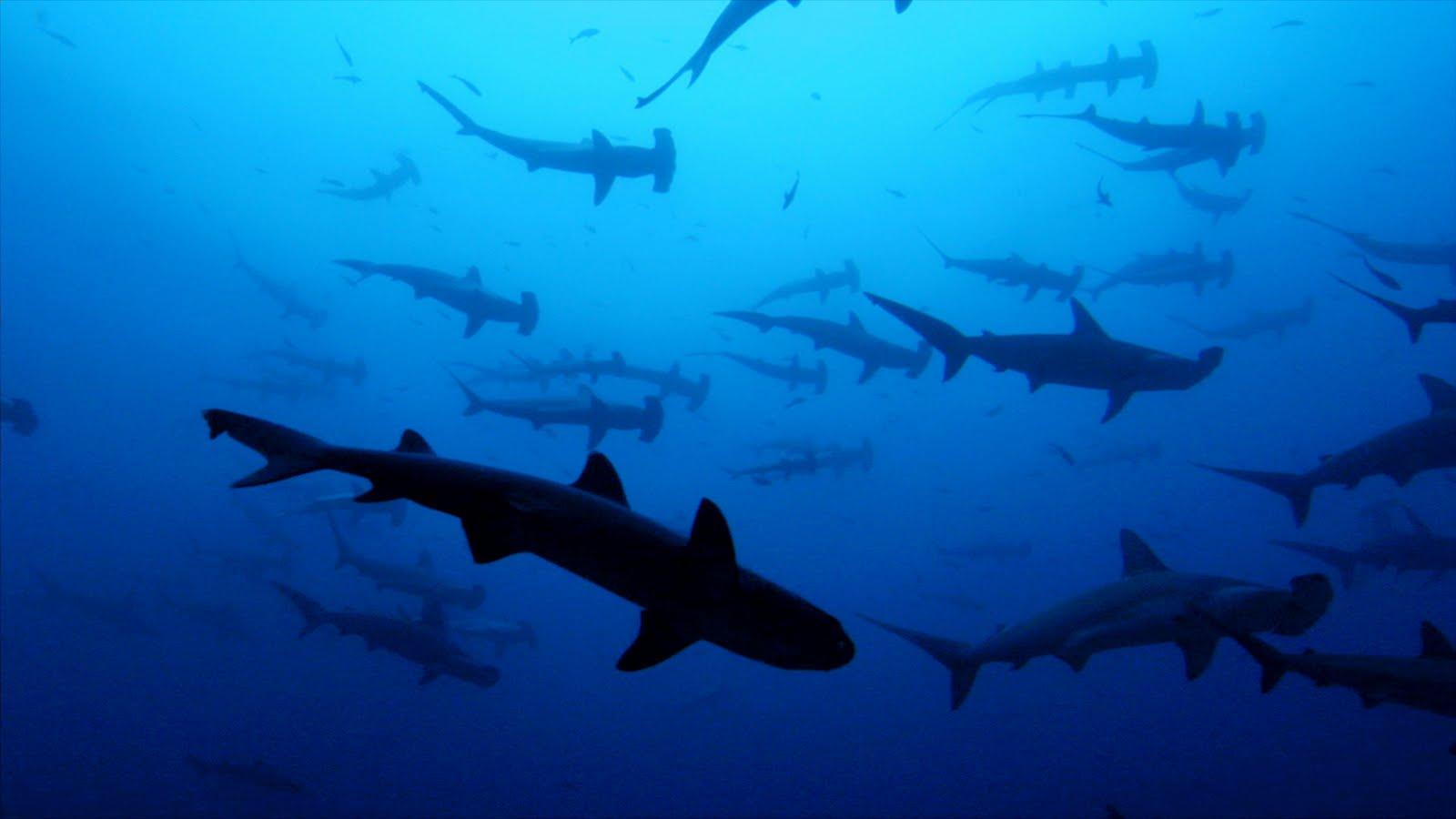 2560x1600 ocean sharks - photo #38
