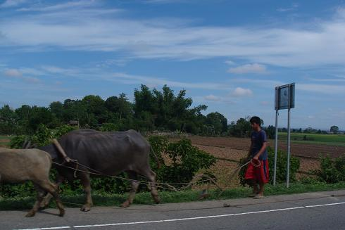 farmer and his carabaos