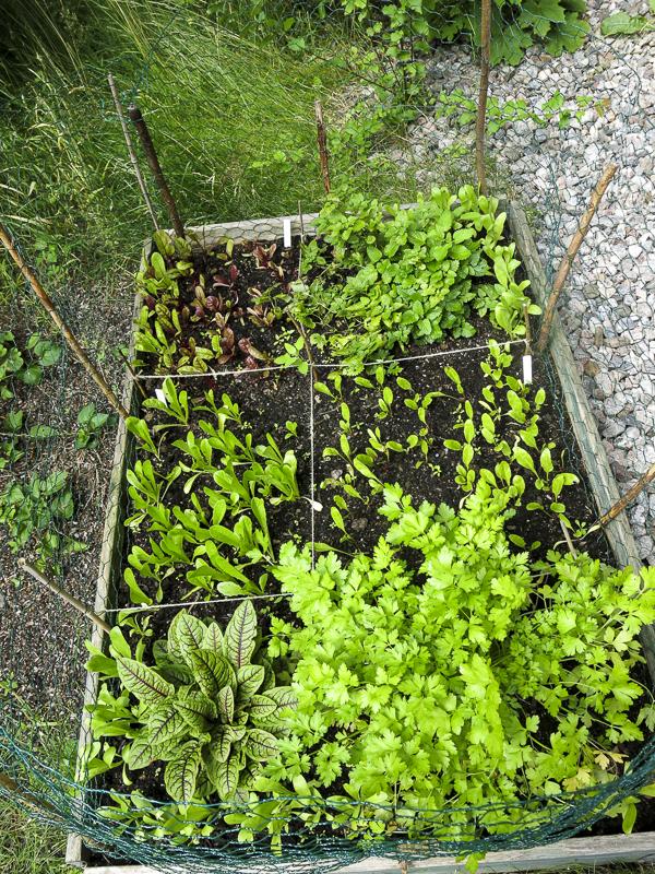 odlingsboxen