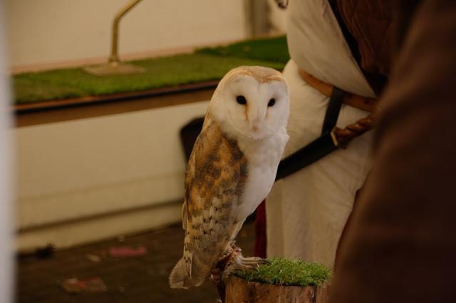 chester owl