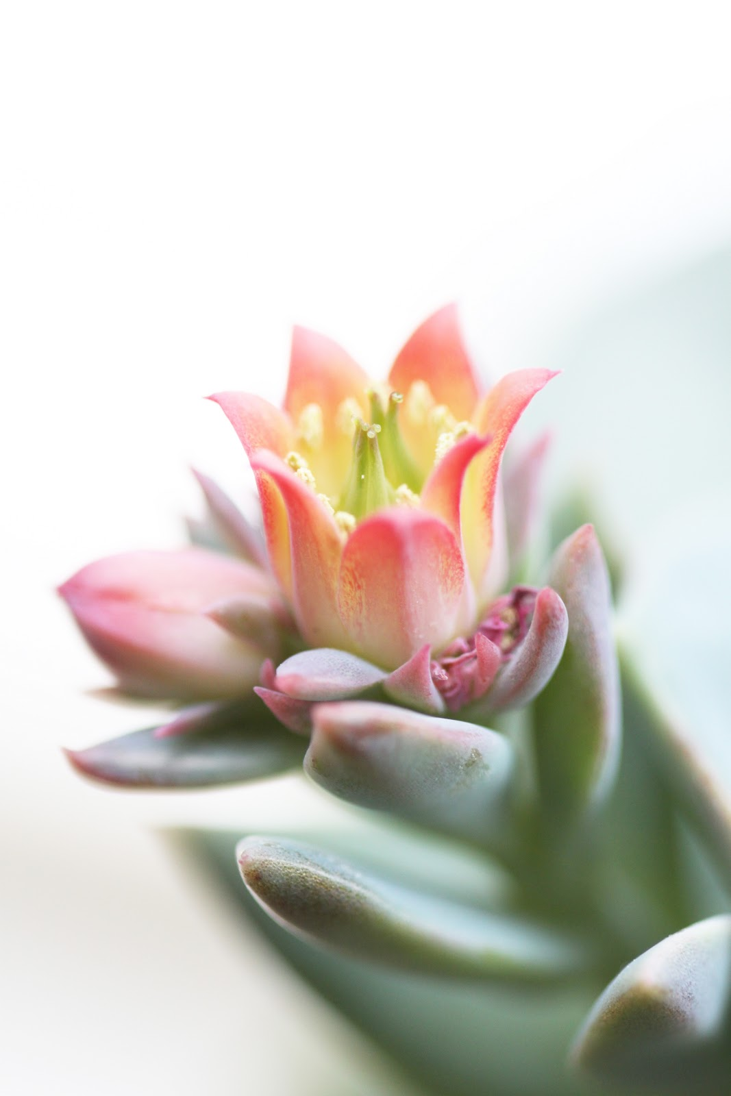 Nittybits Pretty Little Flowers