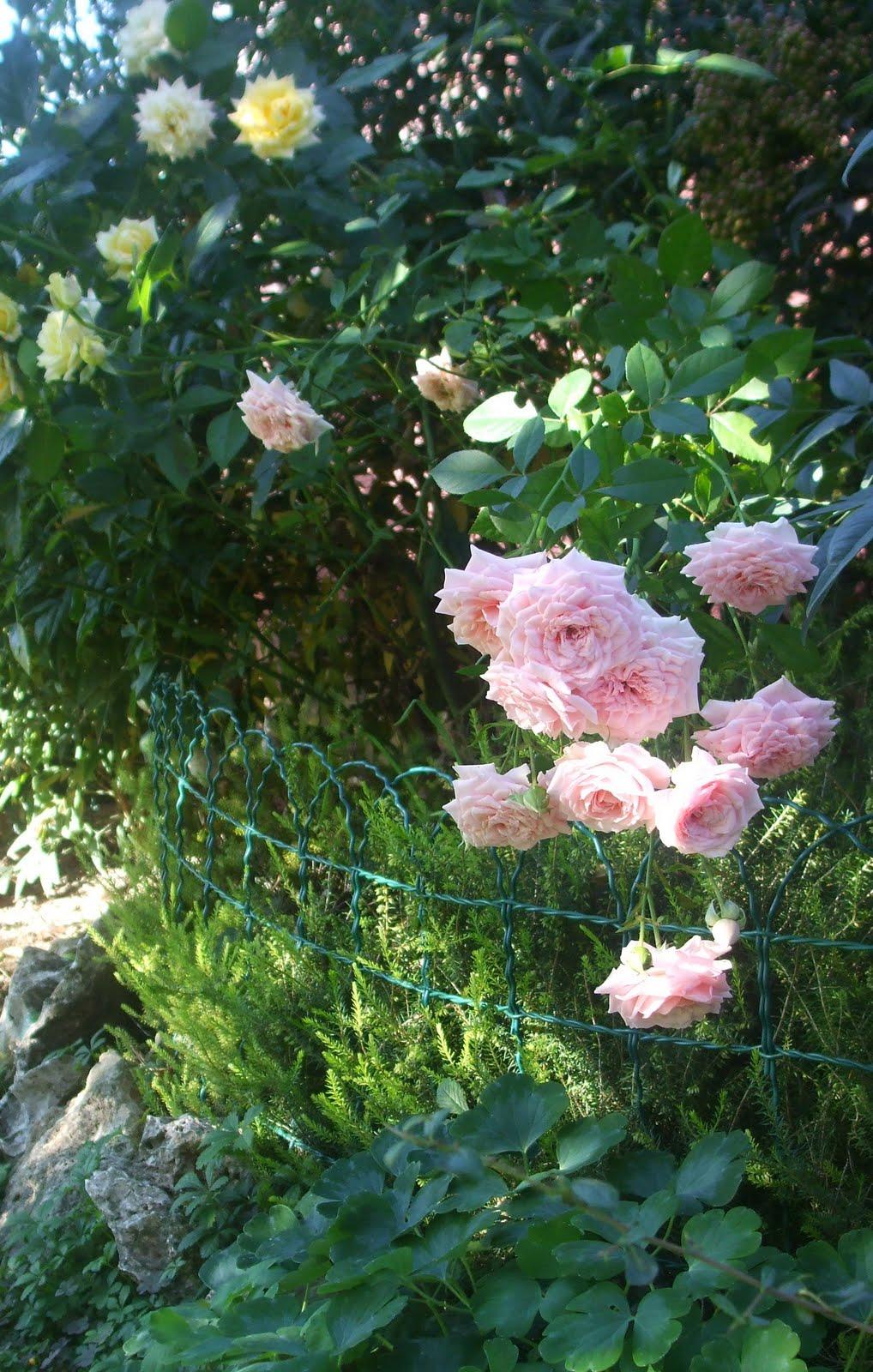 Il piccolo giardino di l la trascuratezza si paga - Sacchi di terra per giardino ...