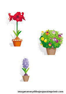 flowerpots with hyacinths or thoughts