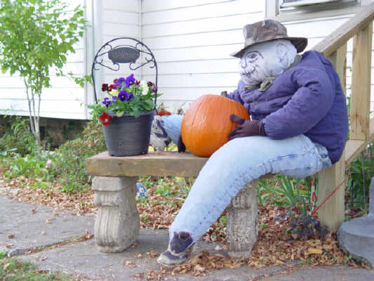 Budget scarecrow 1