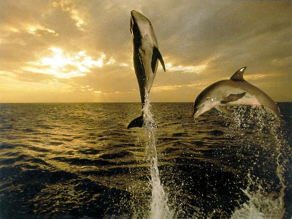 http://1.bp.blogspot.com/-JiuC_nbuCB4/TnDBX9yz5HI/AAAAAAAAAH4/T88oTuQVILI/s1600/dolphin-wallpaper-33-782826.jpg