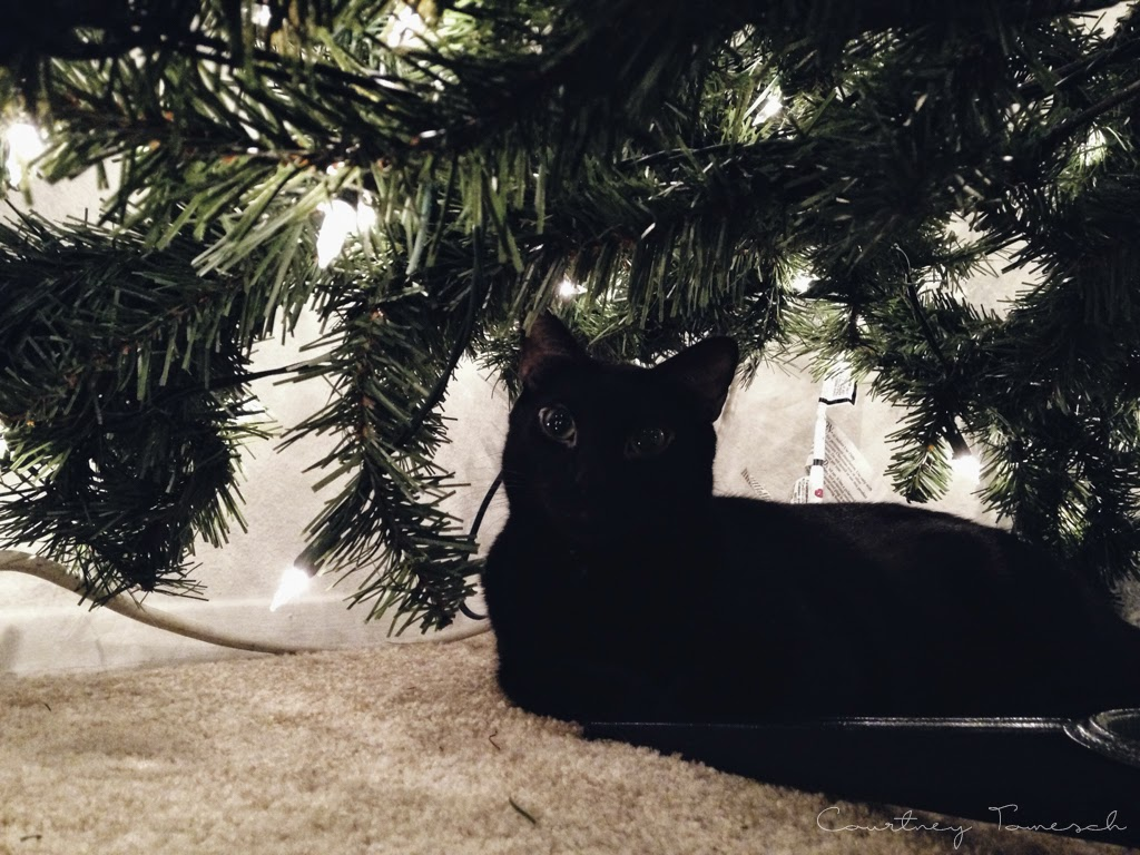 Meelo Black Cat Christmas